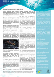 MISA Snapshot, Issue 11/2010 - Mussel growers hatch new plans